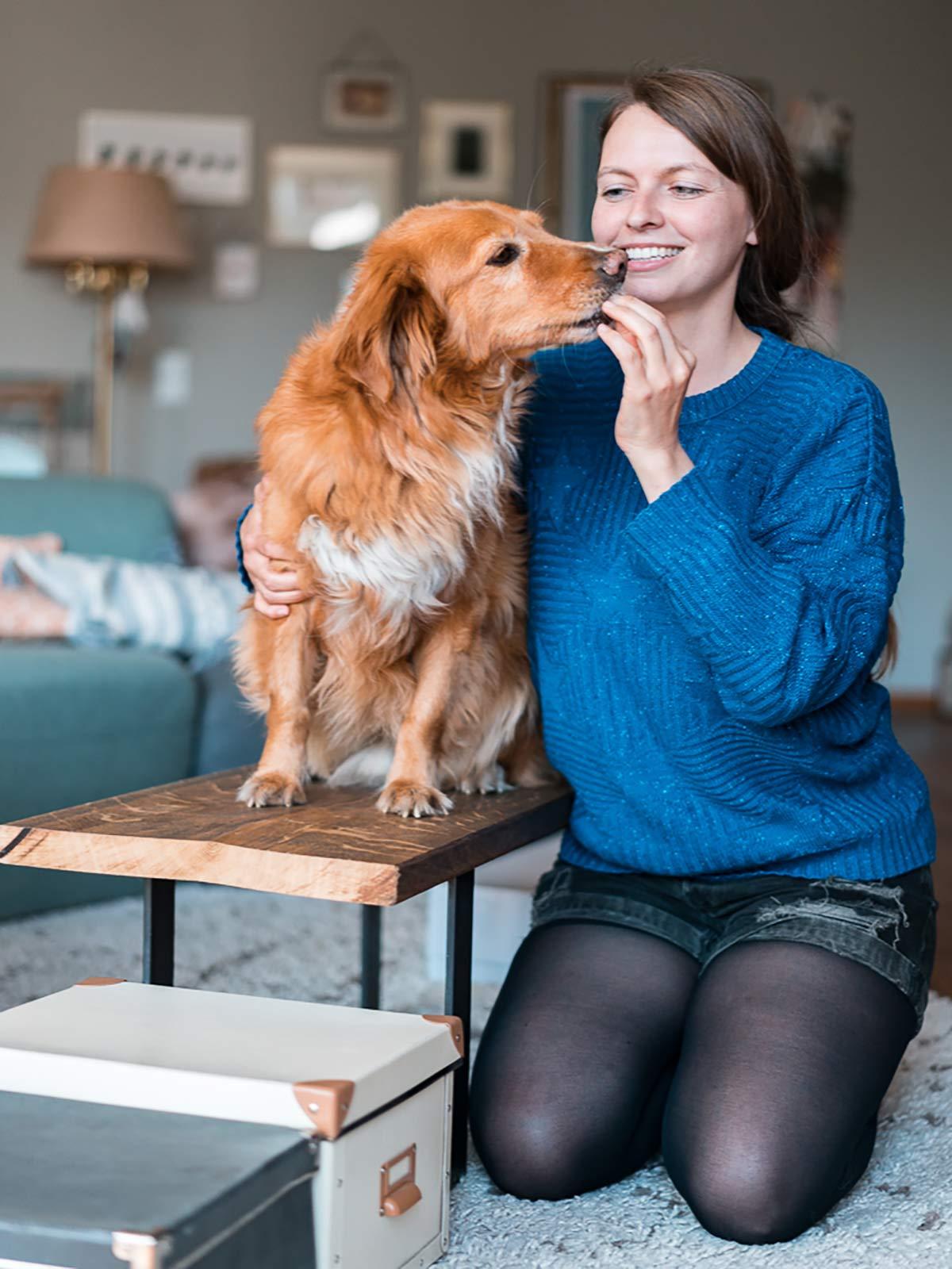 Agility Parcour Wohnung Hund