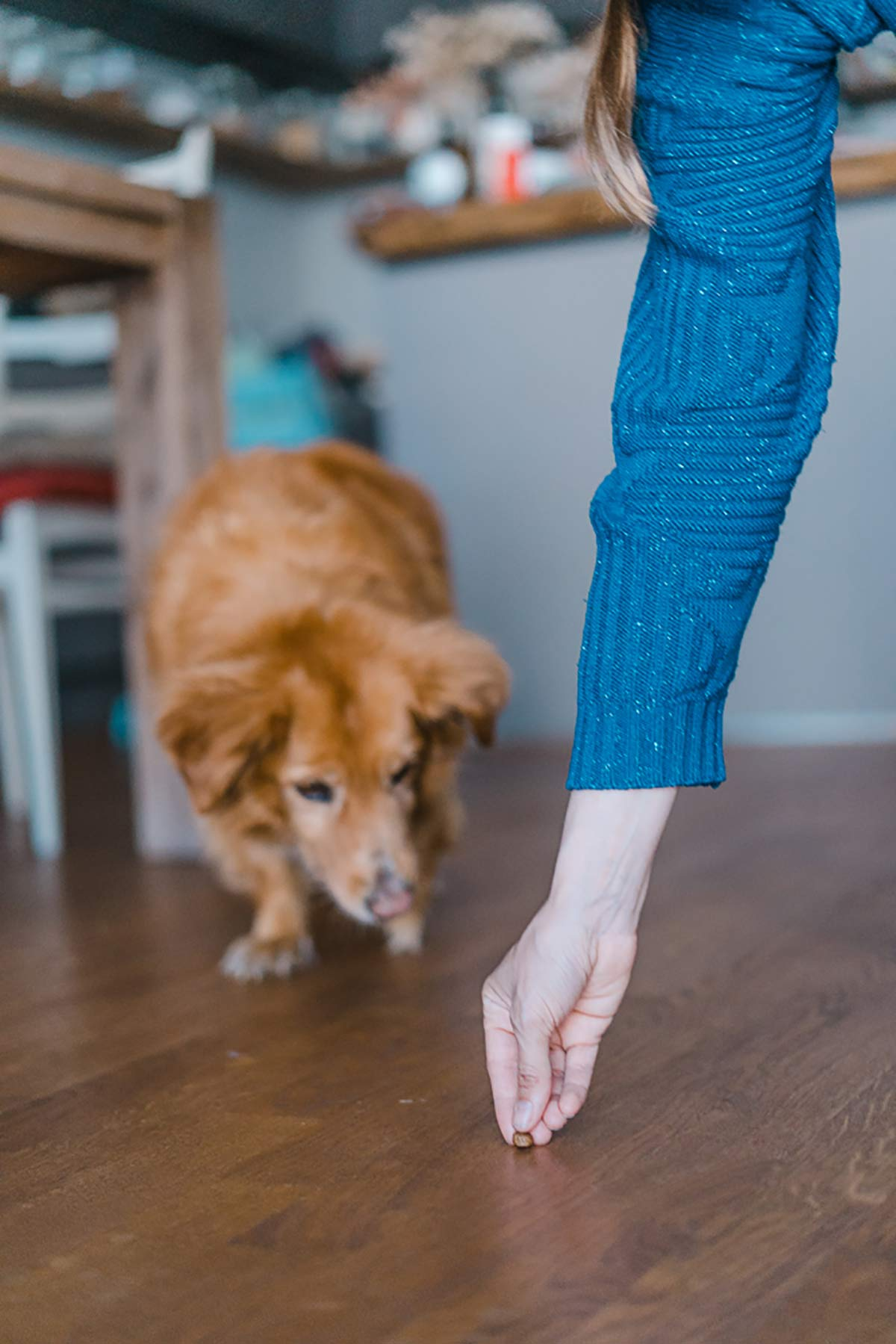 Faehrte aus Futter Hund