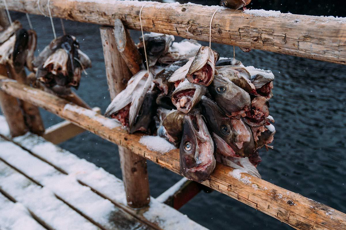 Sakrisoy Fischkoepfe