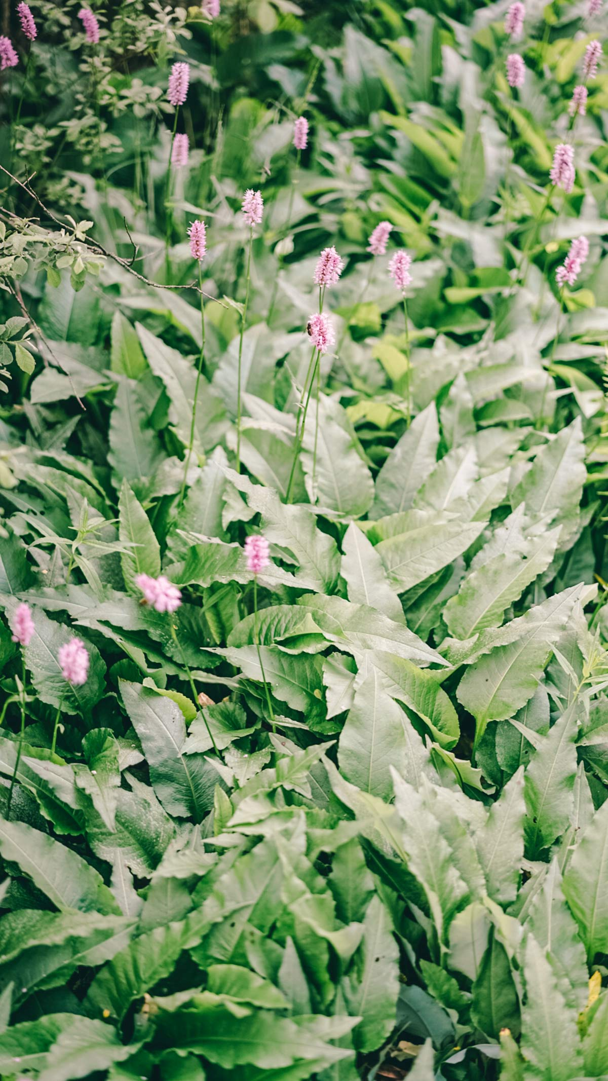 Blumen Schwarze Moor