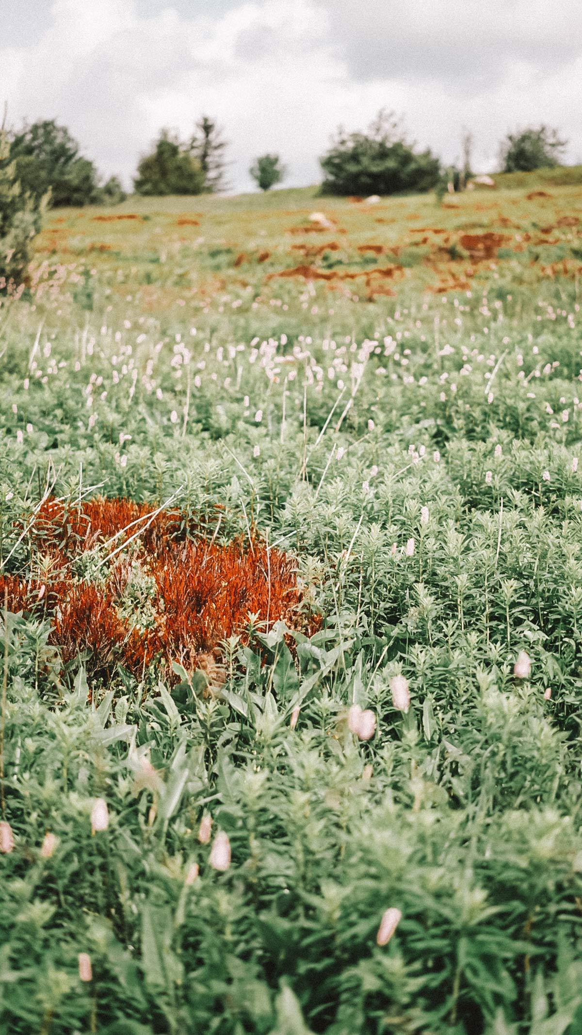 Flora und Fauna Rhoen