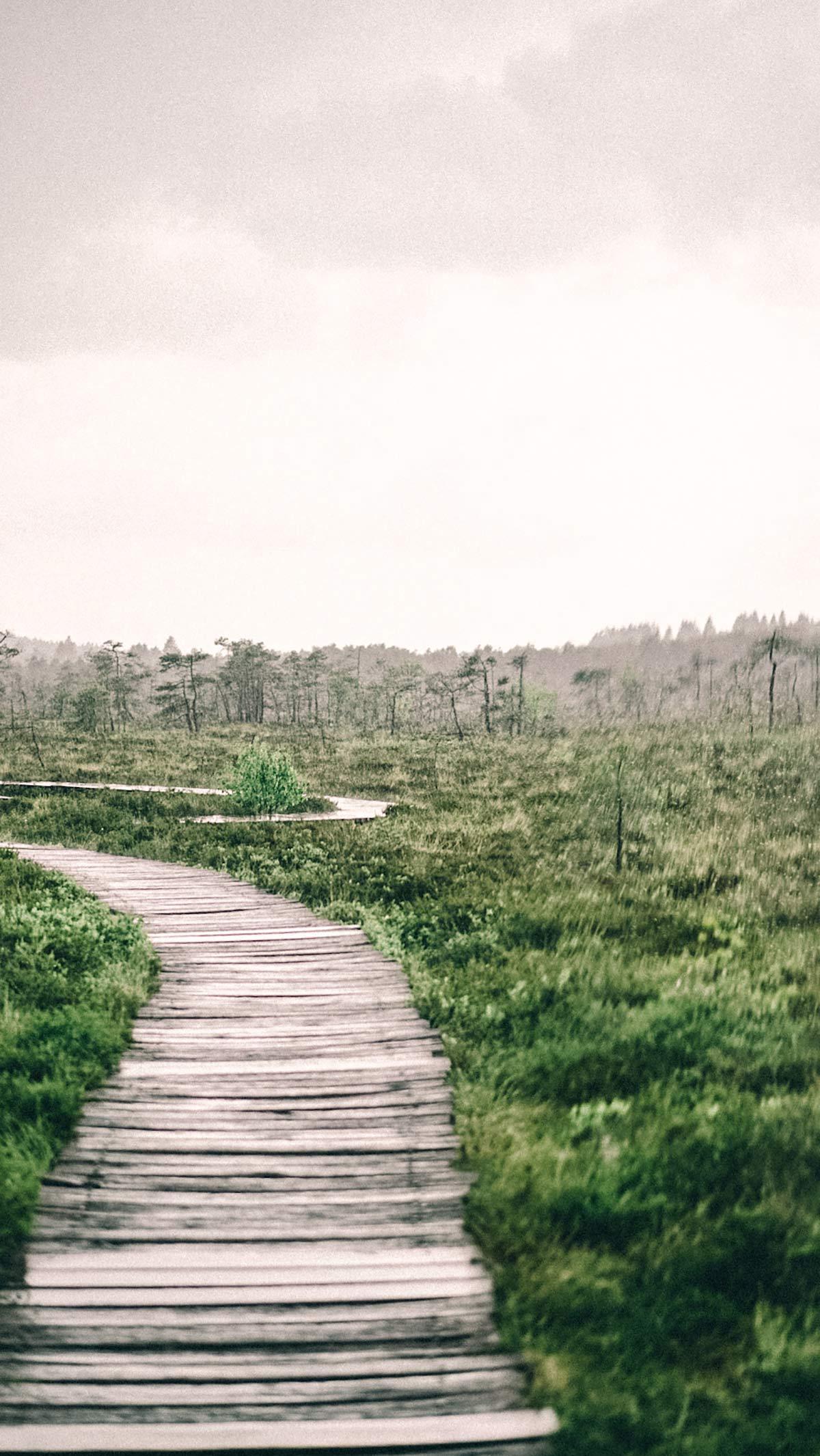 Schwarze Moor Regen