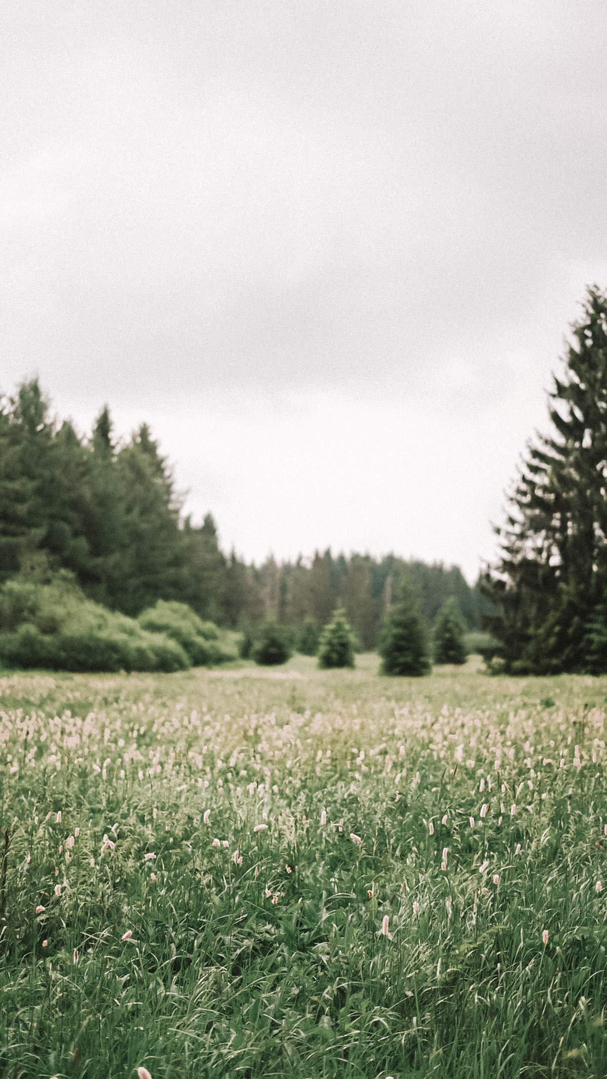 Wald und Wiesen