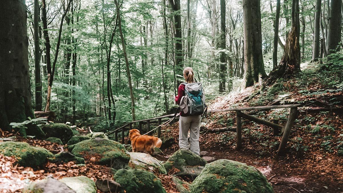 Wald Wanderung Rhoen