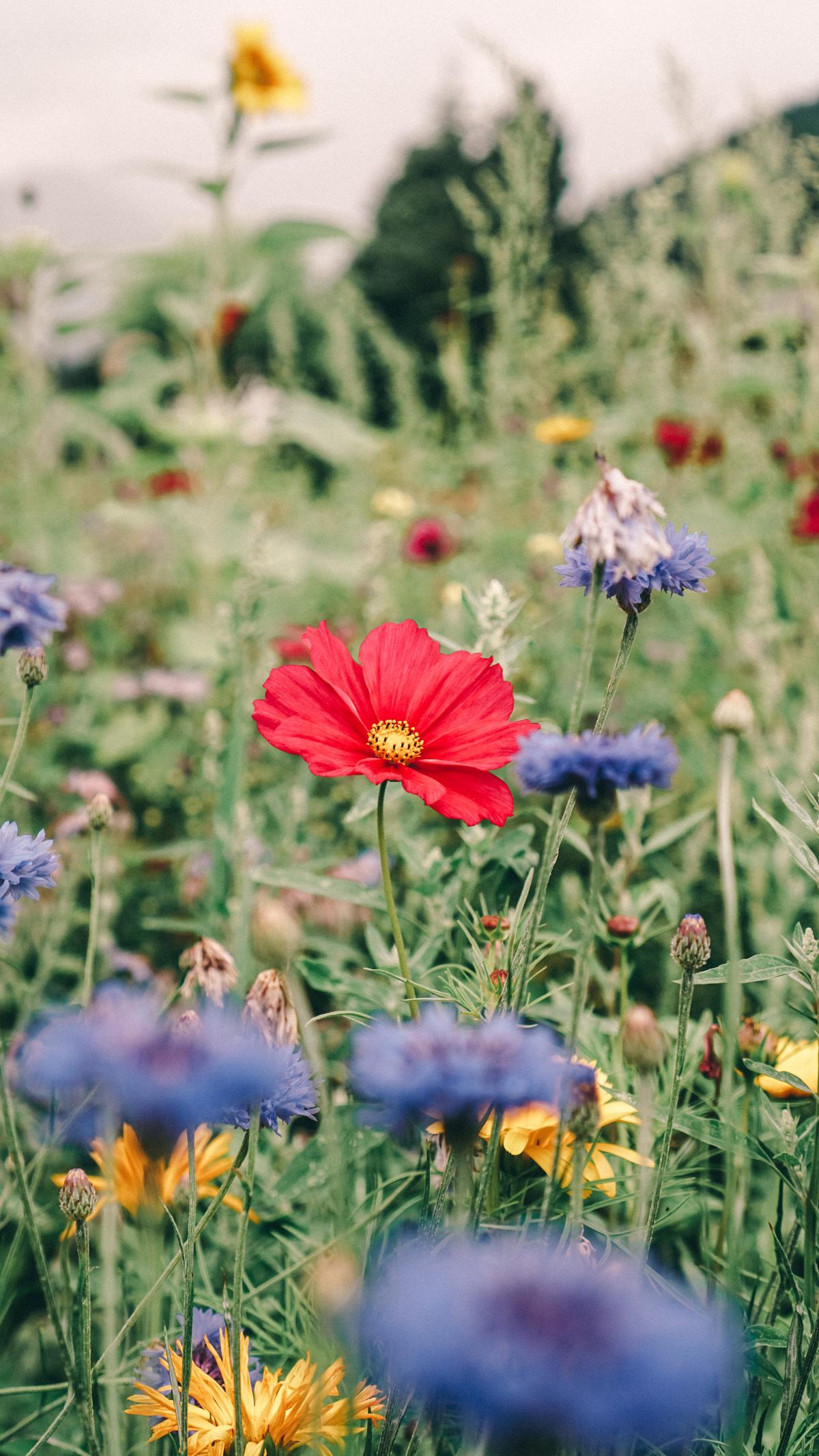 Suedtirol Sehenswuerdigkeiten: 0 km Gerichte Feldblumen