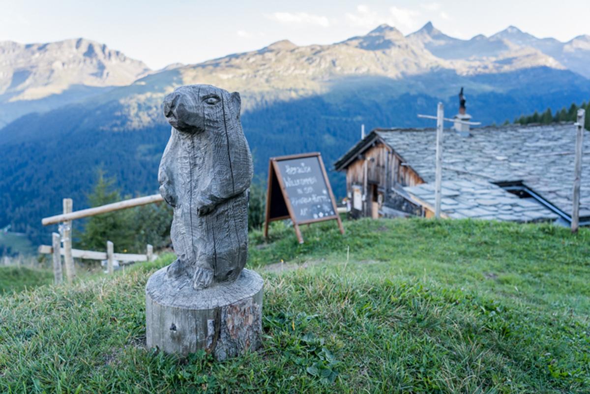 Biber vor der Heangelahuette in Vals