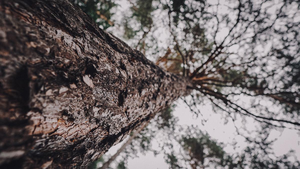 Waldbaden Baum Sand in Taufers