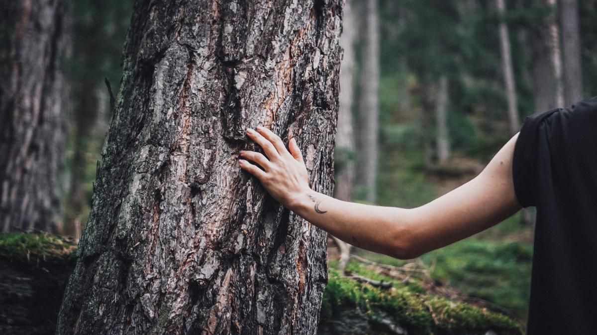 Suedtirol Sehenswuerdigkeiten: Waldbaden Hand