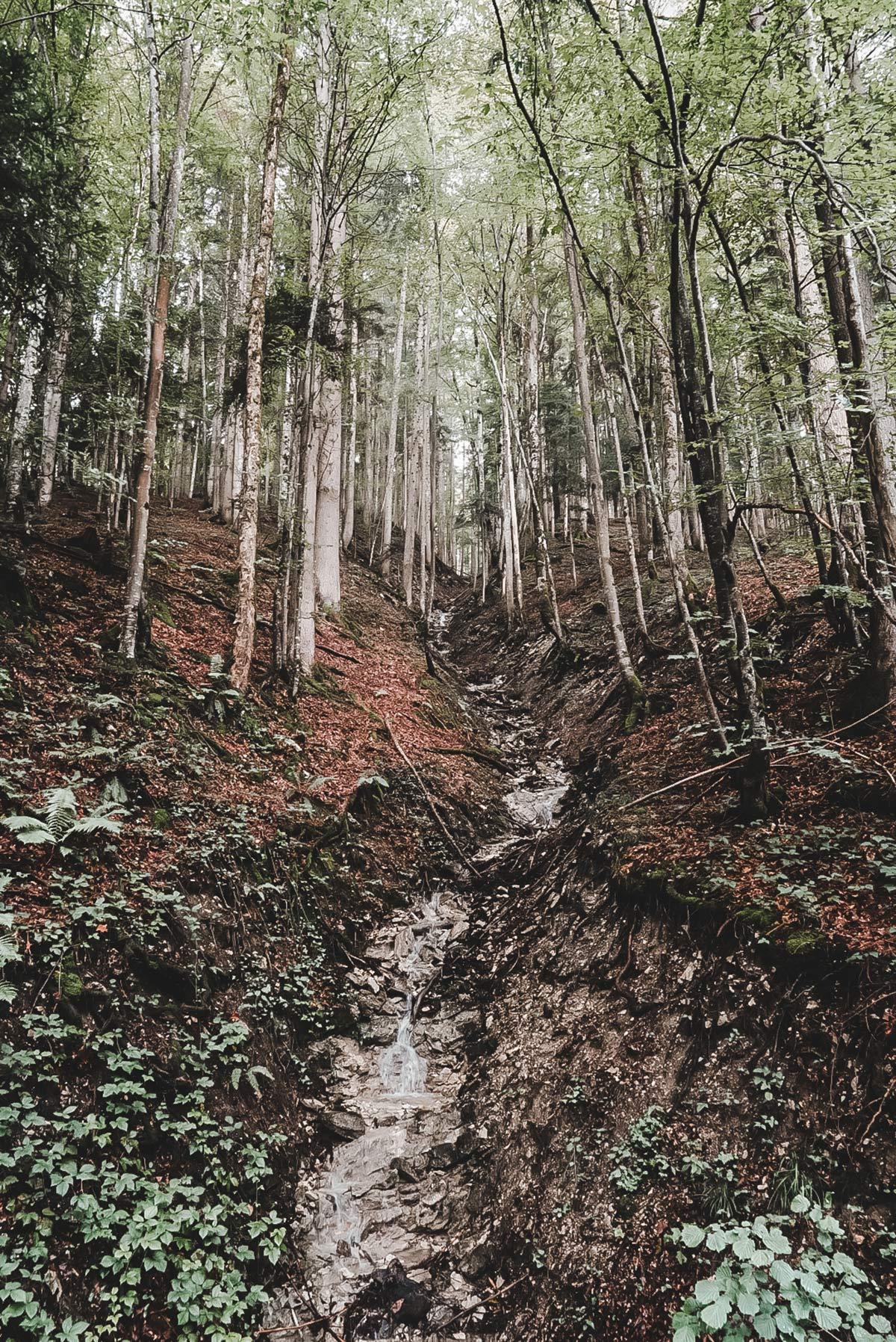 Thiersee Wald Wanderung