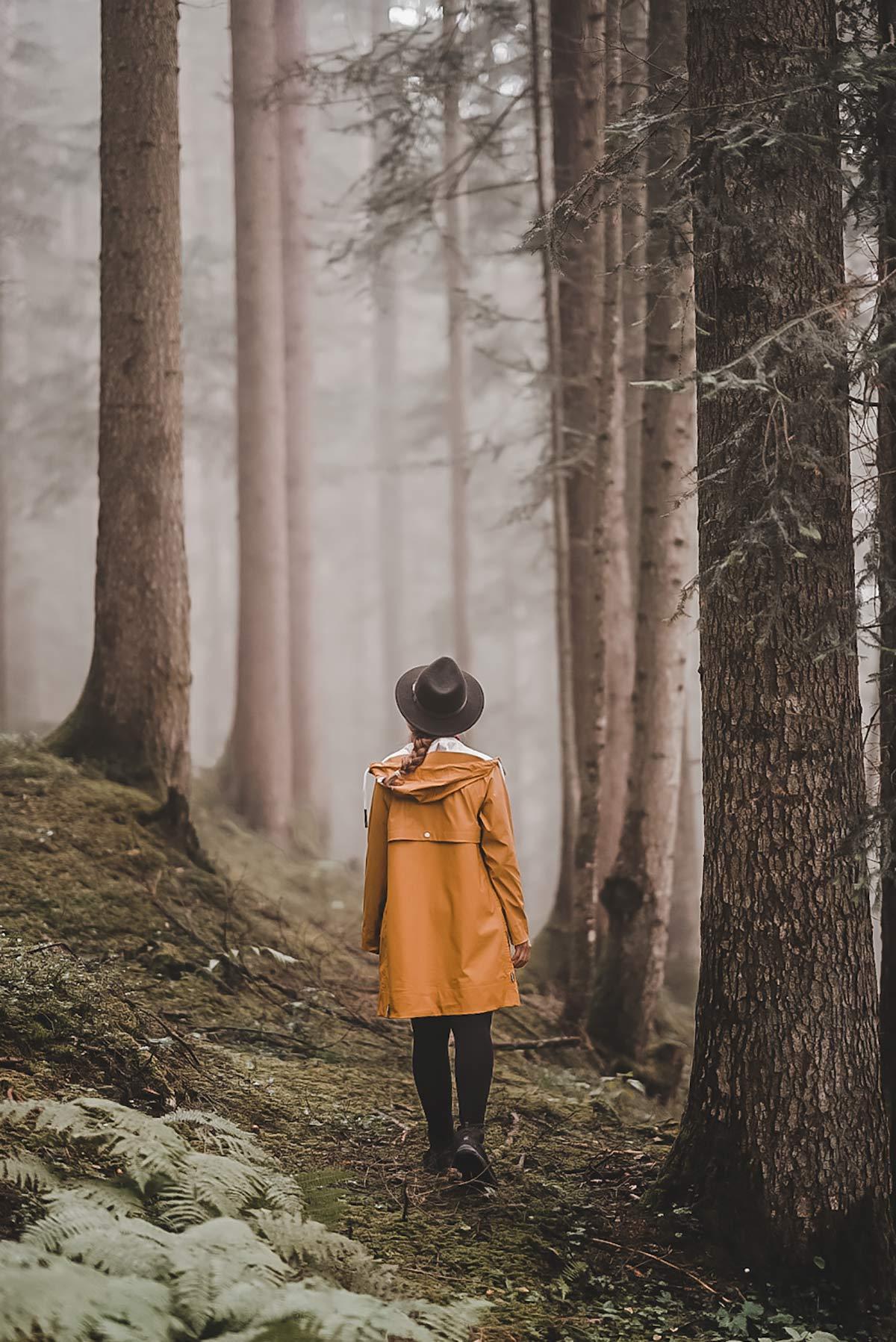 Wanderung Modalwald